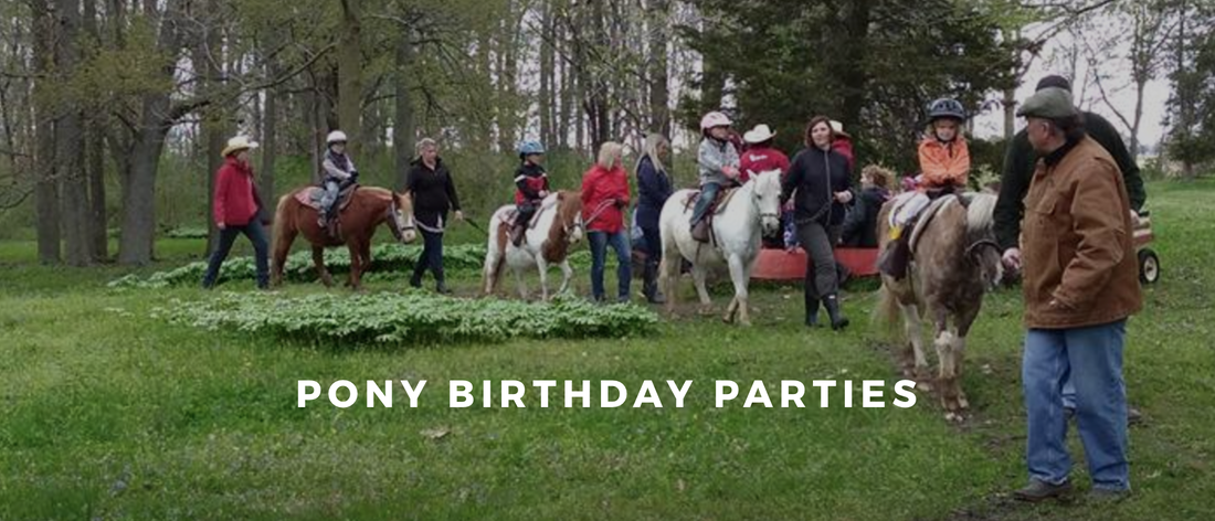 Pony Birthday Party Up To 8 Years Old